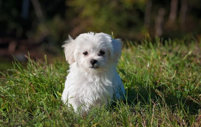 4 Essential Tips to Lead Your Dog to Better Health