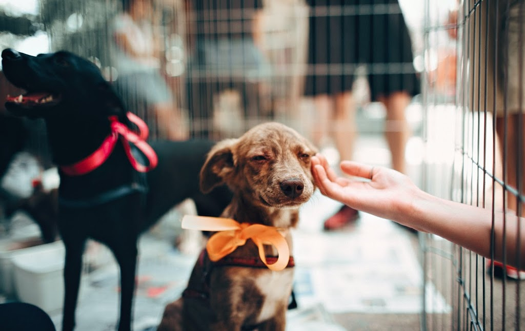 5 Simple Ways Anyone Can Support Animal Shelters
