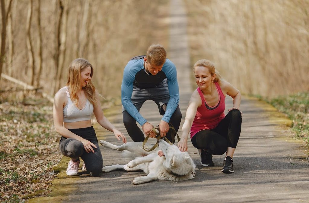 Dogs Foster Activity While Improving Vascular Health