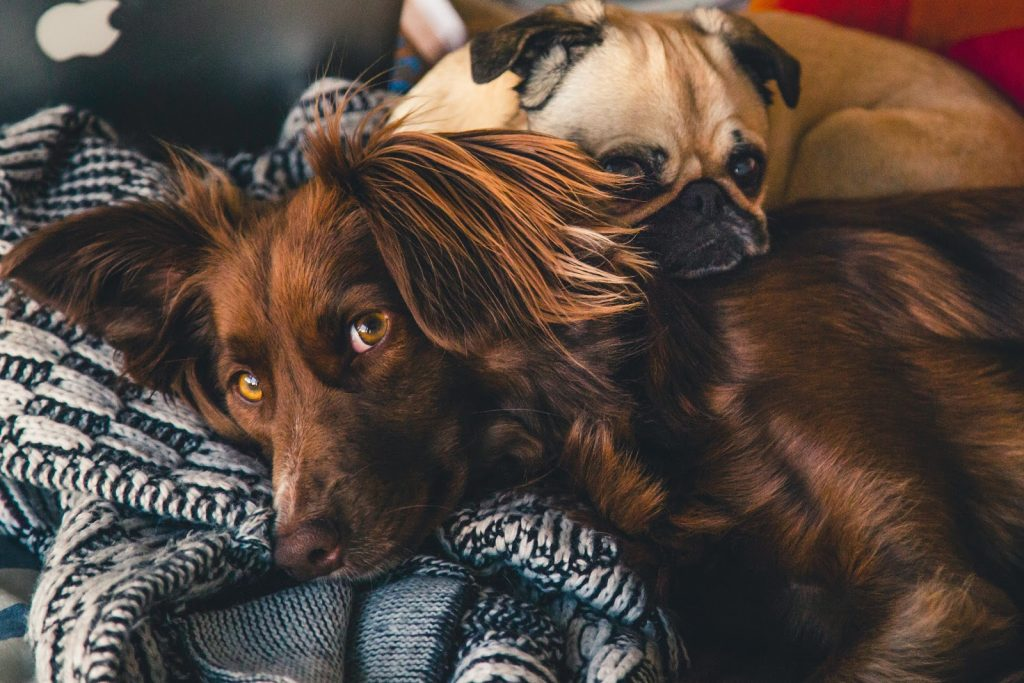 Planing For Vacation ? Help Your Pet Feel at Home