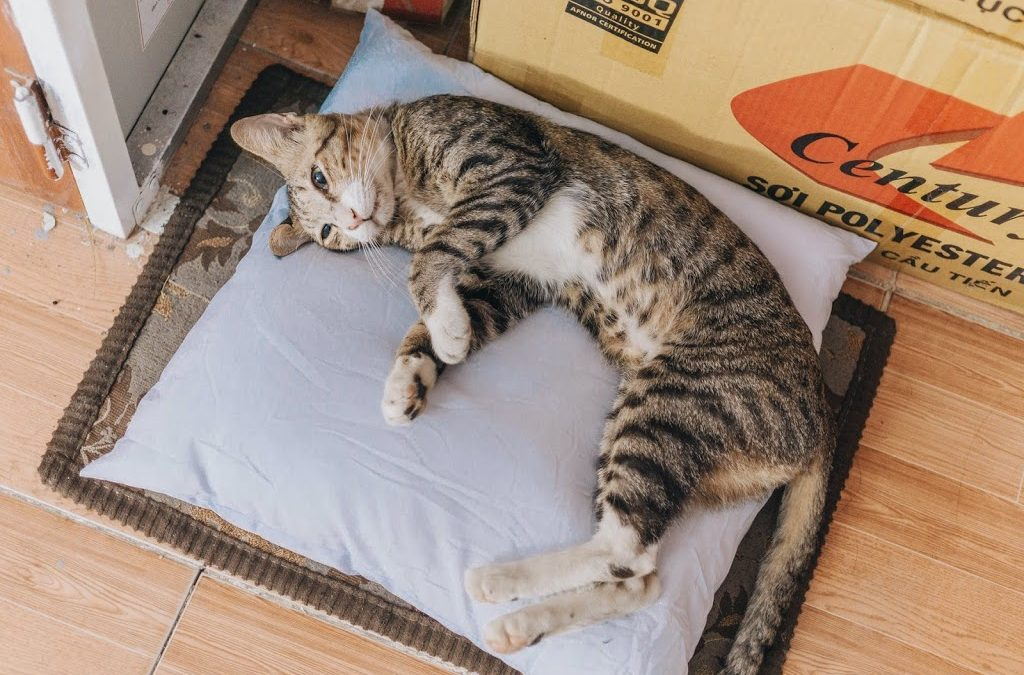 Avoid Feline Urinary tract problems by litter box cleaning