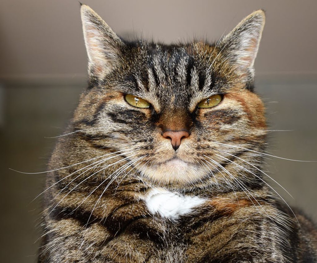 Three ways to Keep Your Aging Cat From Becoming a Grouchy