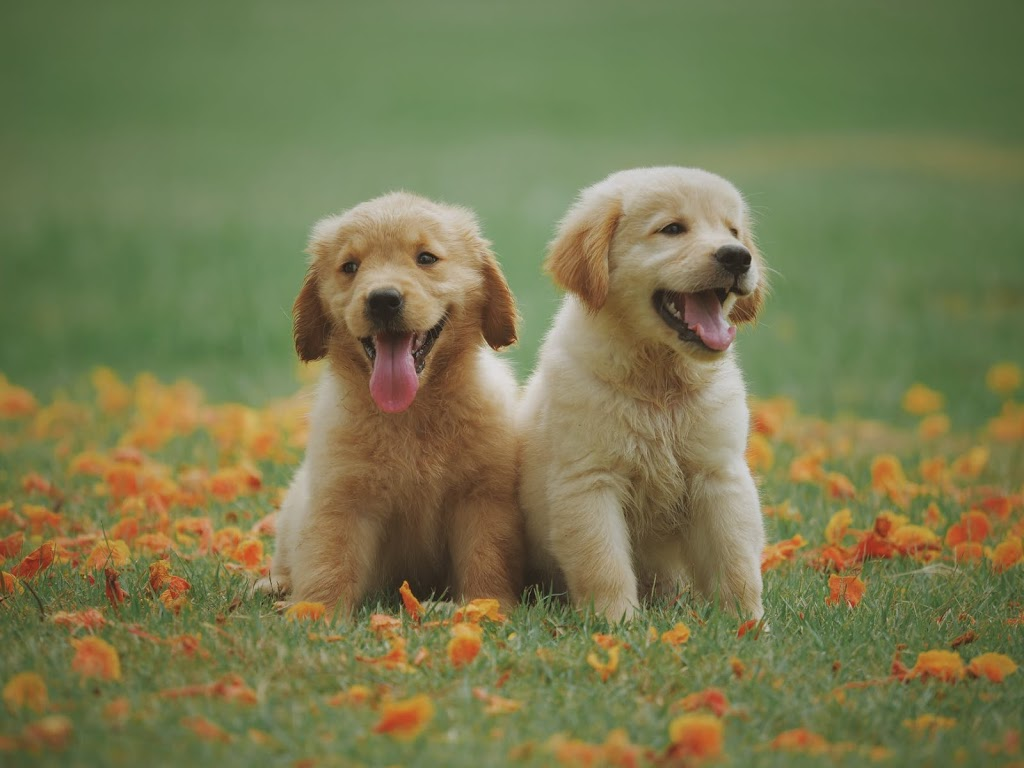 Top 5 Healthy Habits for Pets and Their Owners