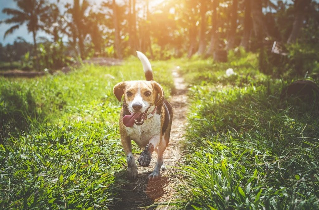 What Do You Know About Probiotics and Your Pet's animals System