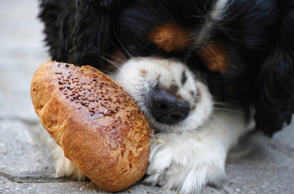 Your Dogs Menu: Raw Dog Food Recipes That They Certainly Love