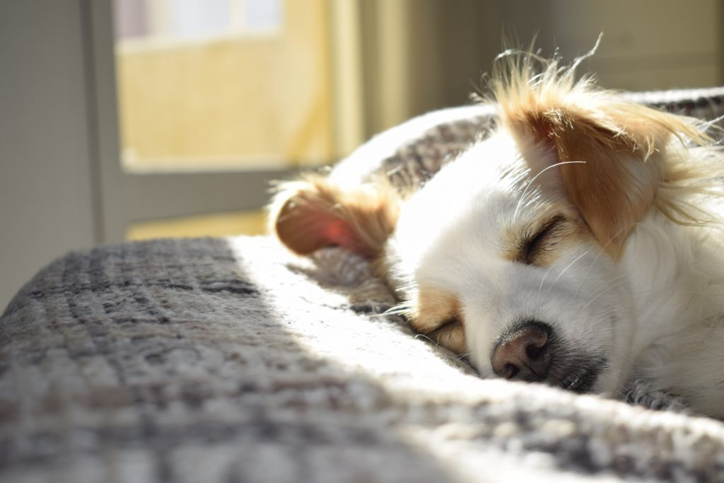 Dog Peeing on Bed: Why Does My Dog Pee on My Bed?