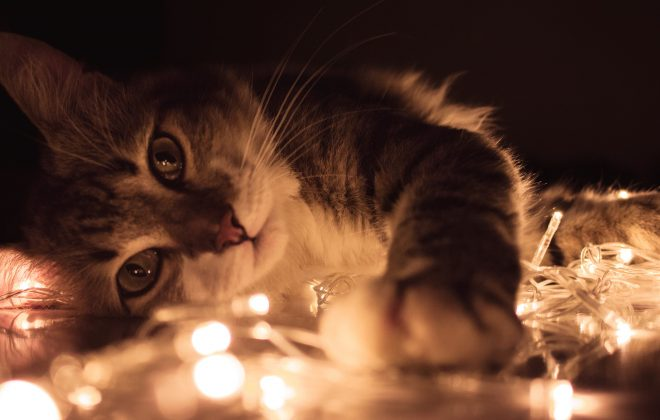 3 Solutions For Cat Lovers Living In Small Home