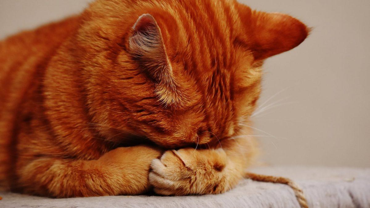 Cat 's Meow: Survey Says Owners Love, Misunderstand Feline Friends