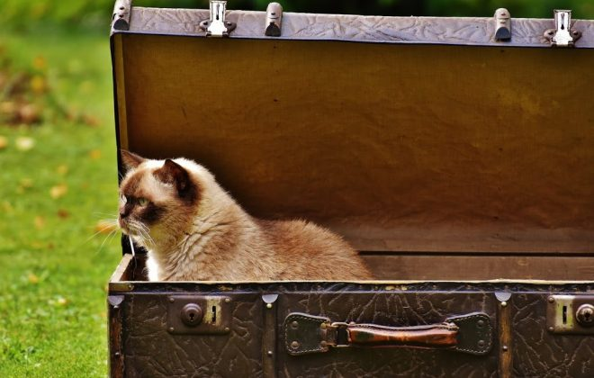 Sweeten the Kitty: Tips for Easier Traveling with your Pet