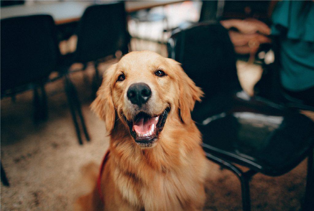 Dog Barking-What Motivates Your Dog Remove the motivation