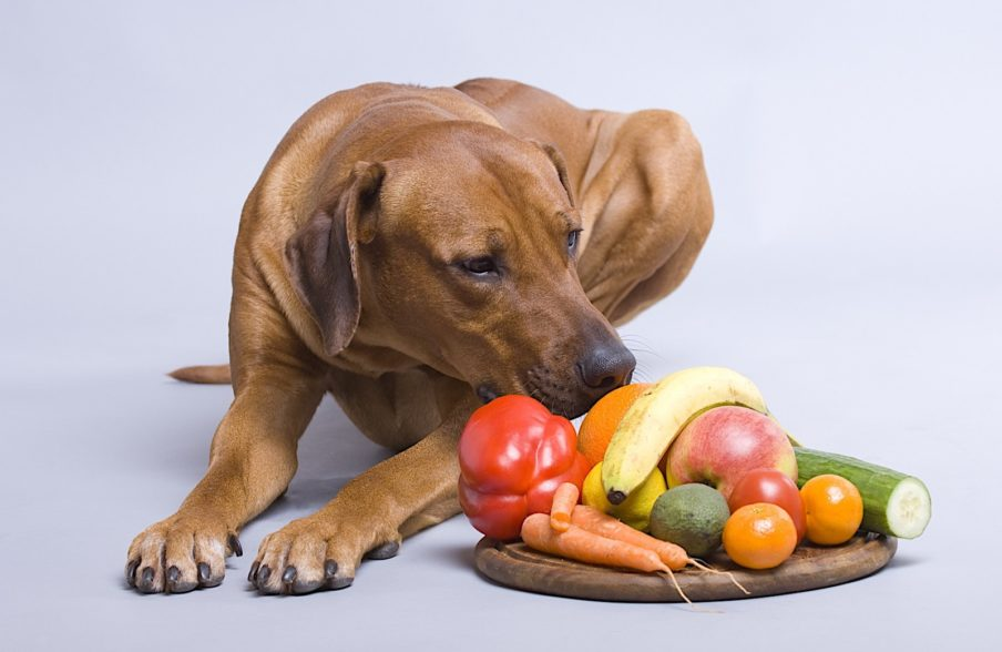 Certain fruits and vegetables Dogs can eat