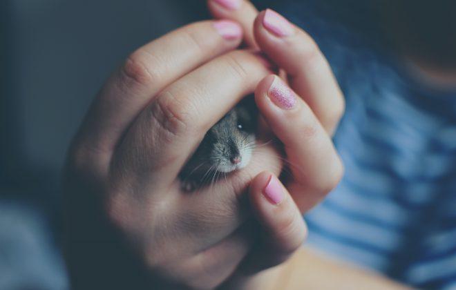 125 Cute Names for Girl Hamster
