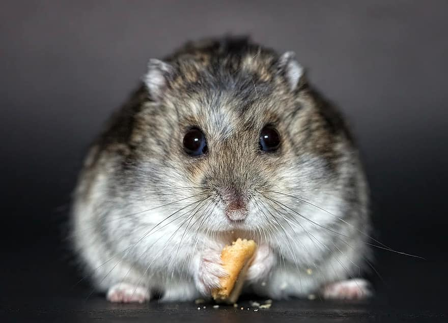 Can hamsters eat white bread?