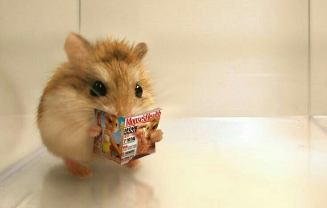 Things You Need to Know Before Getting a Pet Hamster