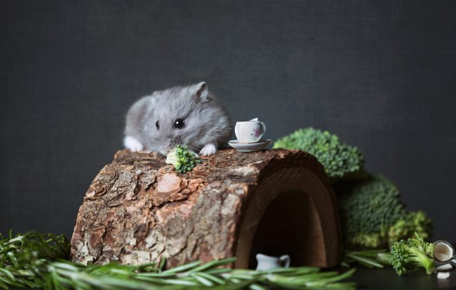 What do hamster eat? - The Hamster Food Guide