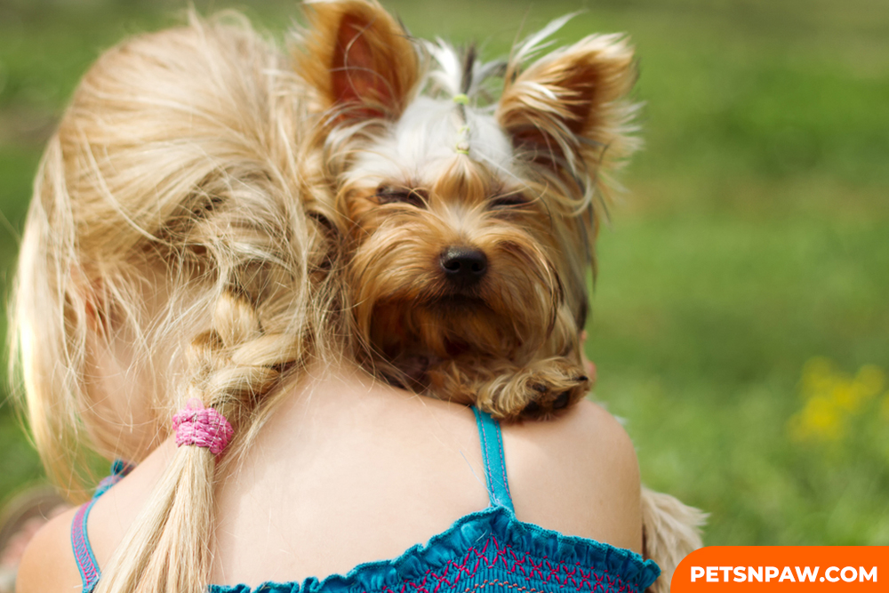 Yorkie Poos ARE A FASHION-READY. ARE SOCIABLE AND CAN GET ALONG WITH MANY PEOPLE AND DIFFERENT PETS