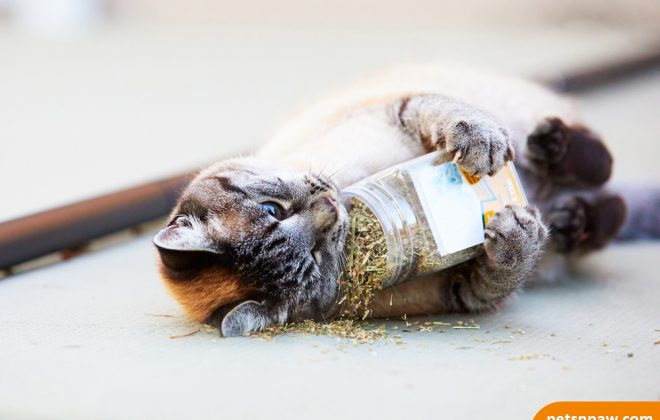 The Catnip Spell & What Does It Do To Cats